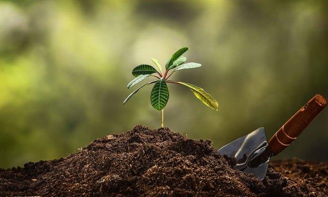 planting-trees.jpg